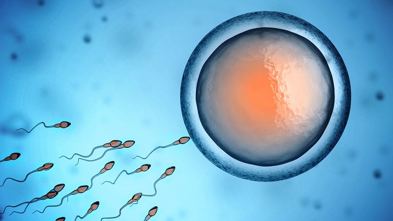здравето на яйцеклетките