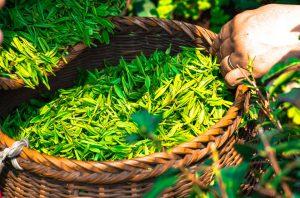 Кошница зелен чай