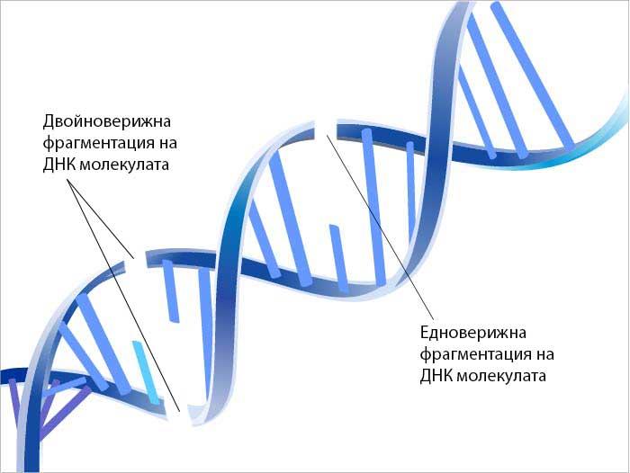 ДНК фрагментация видове