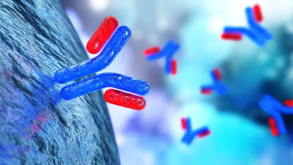 антиспермални-антитела